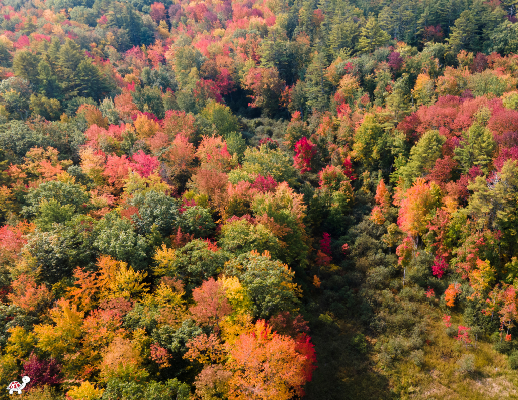 fall break trips for families - Maine